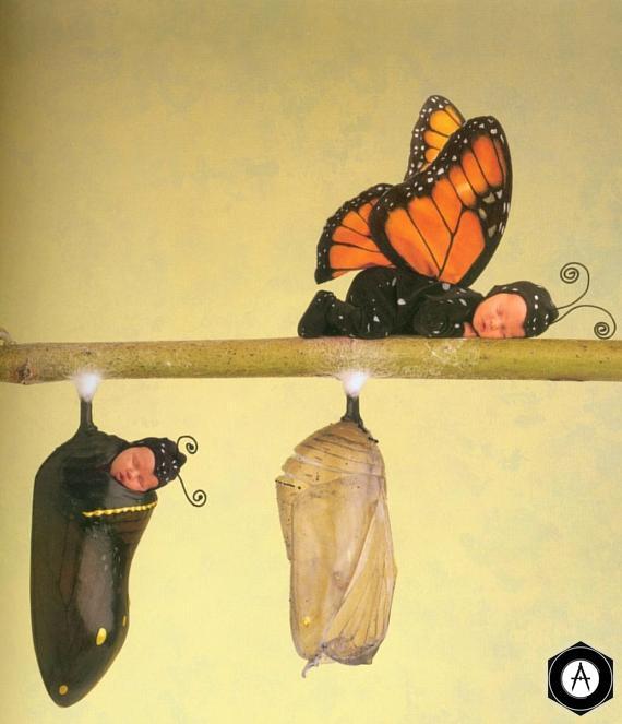 бабочки и куколки