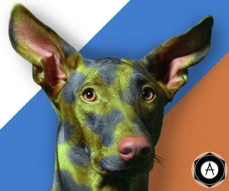 Армейская собака