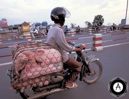 свиновоз