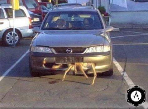 Opel Vectra сумчатый